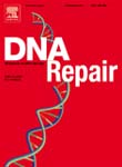 DNA REPAIR 